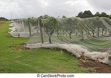 Grape Net 3