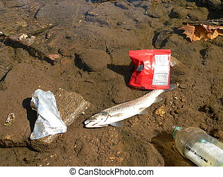 Pollution - Dead fish and trash