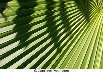 Palm Background - Palm leaf in the sun with shadow falling...