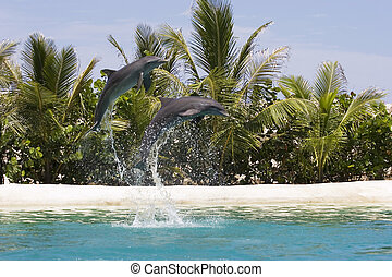Dolphins Playing  - Two dolpins jumping out of water