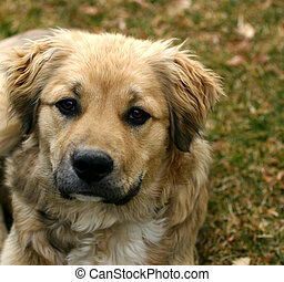 Dog - Mixed breed puppy resuced from dog pound showing...