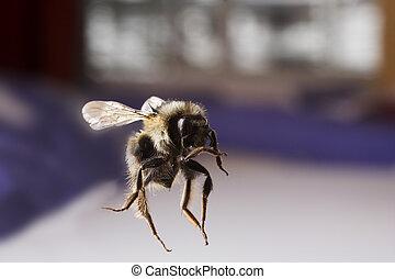 vuelo, abeja