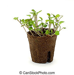 potted seedlings 2 - potted seedlings view from side