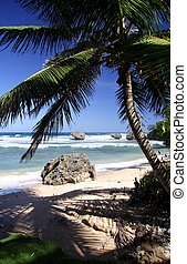 Tropical Beach - Beautiful caribbean beach