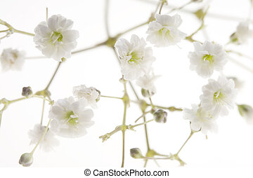 Babys Breath - Photo of Babys Breath shot at very high...