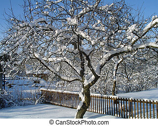 Winter - winter in my garden