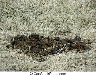 horse manure - some horse manure in a field