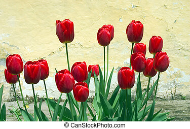 beauty red flowers