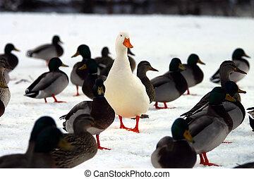 Haga, usted, estante, afuera, crowd?