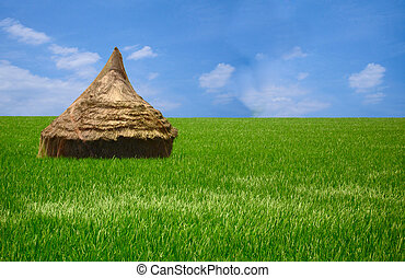 Beautiful Rice Field - Green grass and a blue sky seperated...