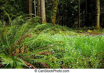 Washington trails - Rainforest on Olympic peninsula,...