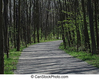 Forest path with shadows in rosemere quebec