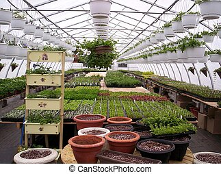 greenhouse and plants