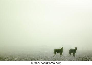 pradera, caballos