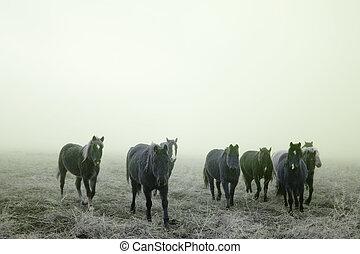Prairie Horses - Horses on the prairie in winter