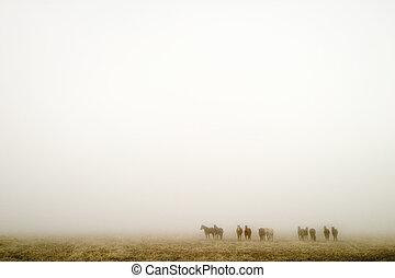 Prairie Fog - Horses on a foggy day on the saskatchewan...