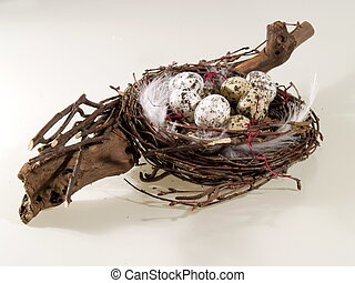 Birds nest - Birch nest with quails eggs, white background...