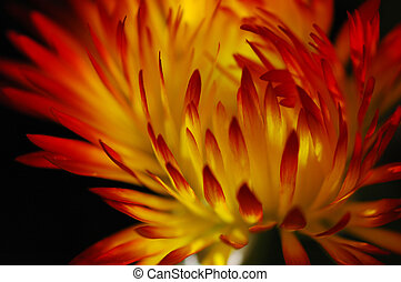 Flower in flame
