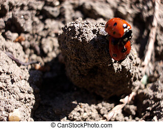 ladybirds Mateing - This is some ladybirds