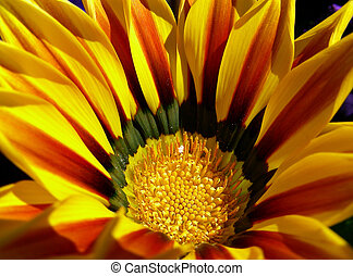 Orange and Yellow - Orange and yellow flower basking in the...