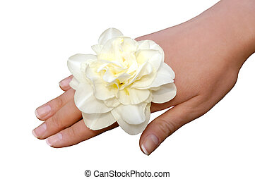 White narcissus on woman hand isolated