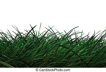 CG Grass - Computer generated grass on white background
