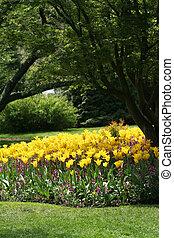 tulips and garden