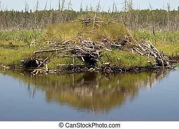 Beaver Lodge & Pond - Boreal Forest in Northern Ontario,...