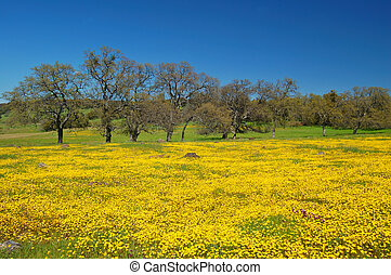 springtime meadow - wildflower meadow in springtime, near...