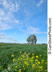 springtime landscape - tree in a spring meadow