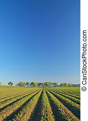 rural countryside - agricultural field in springtime