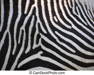 Details of zebra as a fur background