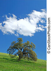 oak tree in spring - tree in a spring meadow