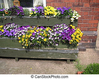 pansy and viola in window boxes