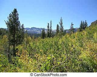 Sierra Landscape - Eastern Sierra Landscape, Ca,USA