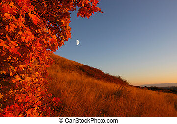 Fall - Moonrise during fall