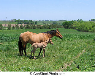 Mare and Foal in the pasture