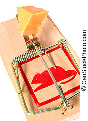 Baited Mousetrap - Mousetrap baited with cheese