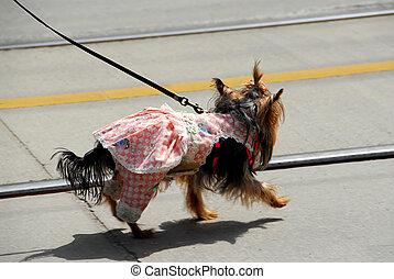 Cute dog in a dress