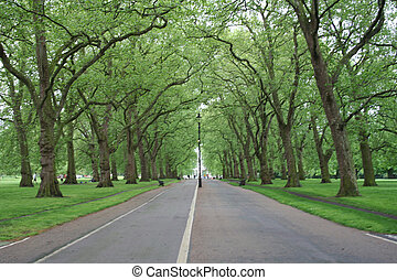Hyde park London - tree lined path in Hyde park London