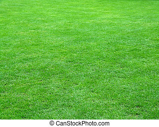 Football field grass - Quality football grass field