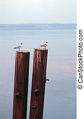 two seagulls with the same body deportment; taken in the...