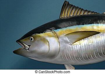 disecado, pez