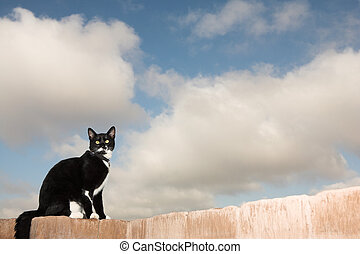 Cat #1 - A black and white cat sitting on a wall.