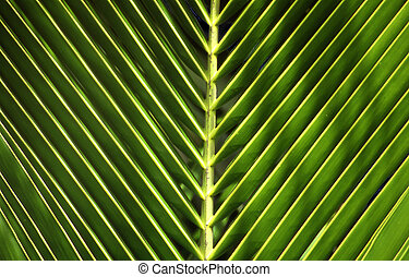 palm-leaf - close-up of a palmtree-leaf or detail of a...