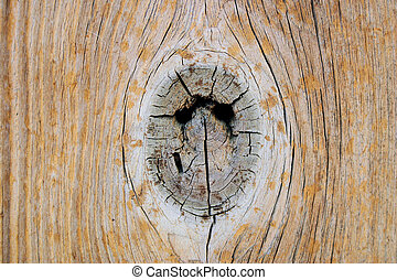 wooden eye - knot hole