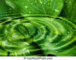 hosta - water hosta