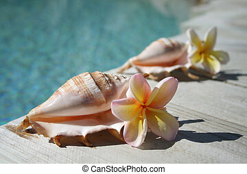 Two Flowers and Shells - Two pink, white and yellow...