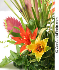 Centerpiece - Bromeliad Centerpiece