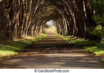 Cypress Tree Tunnel - Tunnel of cypress trees in Pt Reyes...